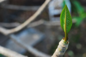 the-perfect-spring-leaf-1024x685
